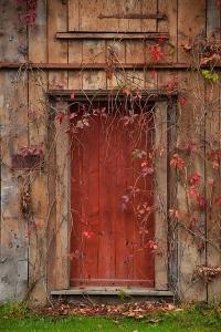 back door 2